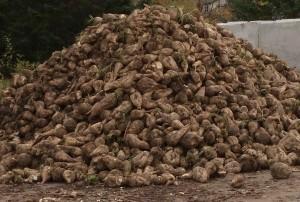 Murdick's Fudge Michigan Sugar Beets