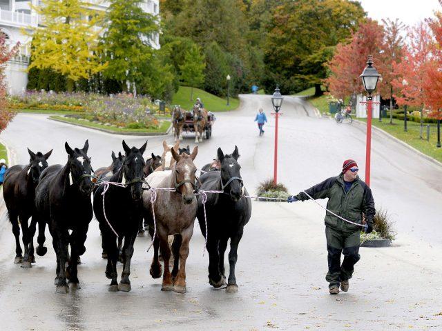 Murdick's Mackiac Horses 4