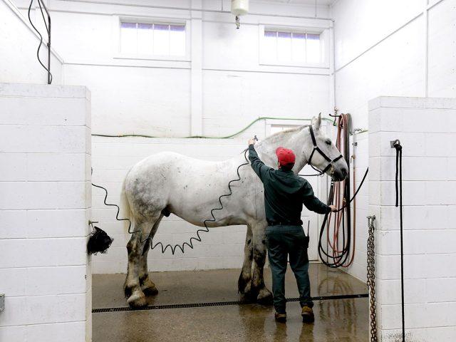Mackinac Horses 2