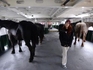 Mackinac Horses 5