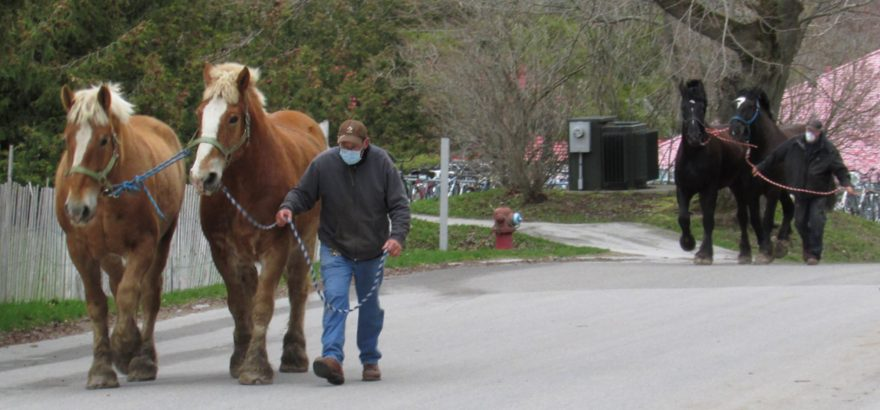 Horses return to Mackinac Island during COVID-19