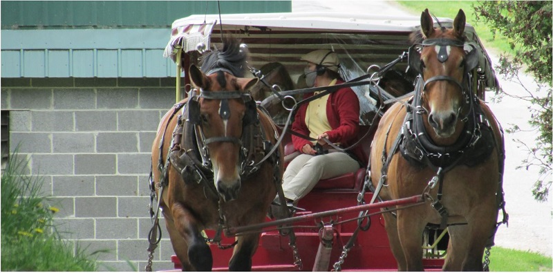 Mackinac Island Carriage Rides