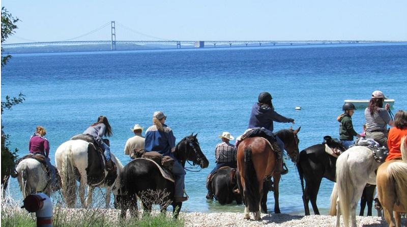 Mackinac Island Horses